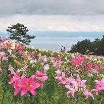 琵琶湖ゆり園