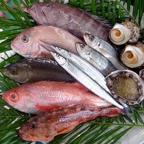 山陰の鮮魚 (写真はイメージです)