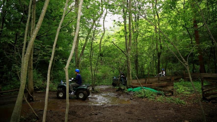 森林の中をバギーで走る!そんな体験が楽しめます!