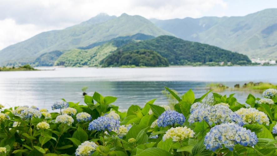 八木崎公園 あじさいと河口湖が綺麗です