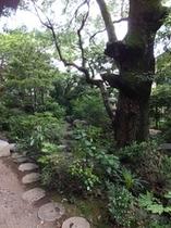 楠(日本庭園)