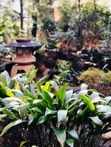 日本庭園近景1