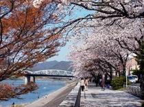 ホテル前 川岸の桜並木