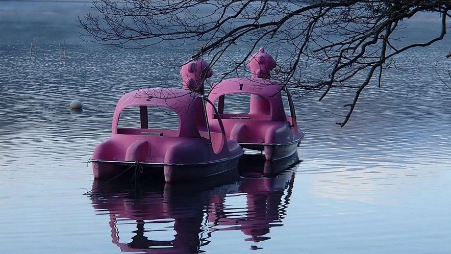 一碧湖畔のTerraceCafeではスワンボートを貸出してくれます☆