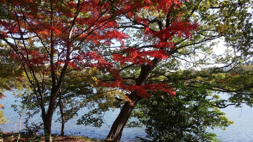 紅葉と一碧湖のコントラストをカメラで切り取って。素敵な1枚をどうぞ♪