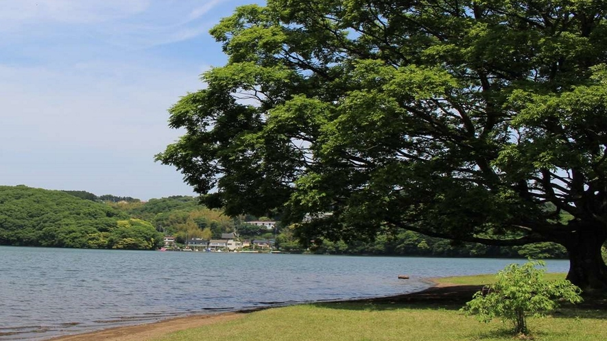 あたたかい時期には豊かな緑に包まれる一碧湖。四季折々の姿をお楽しみください。