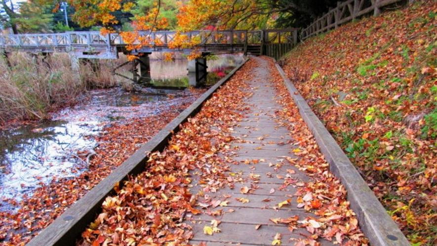 木々が赤く染まる季節、湖畔の道も秋の装いに。