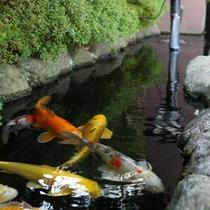 エントランスの鯉