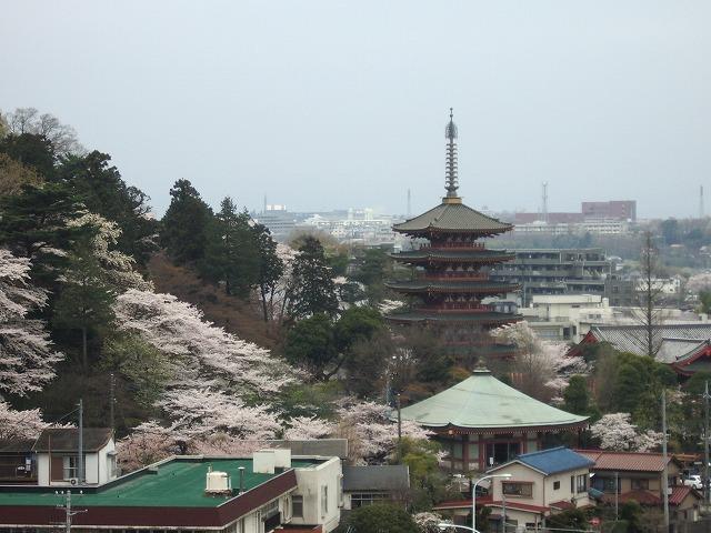高幡不動尊と満開桜