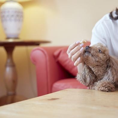 【大切な家族の一員と一緒に】ペットと一緒 ワンちゃんと一緒にお泊りプラン