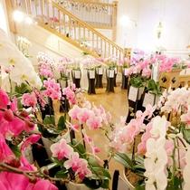 館内では200品種の蘭がお出迎え!