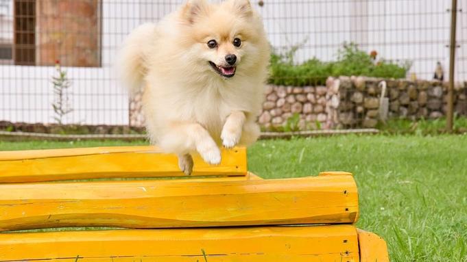 【愛犬と一緒に泊まろう】和洋折衷コース/朝食バイキング★ドッグラン無料