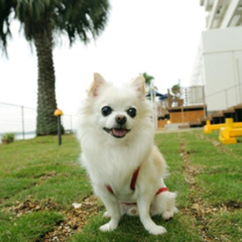 *ドッグカフェ『Cafe the Rodhos』ドッグラン、小型犬限定用、全犬種用と2箇所御用意。