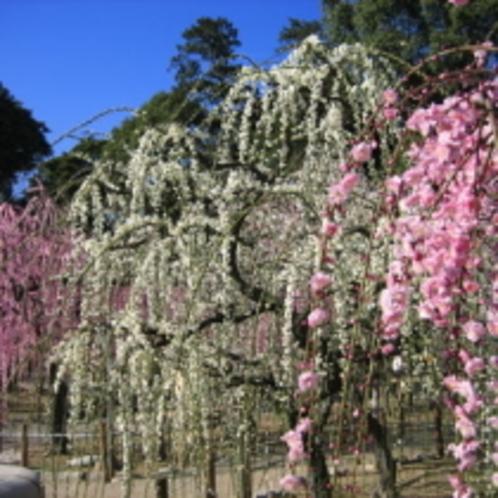 結城神社【当館から車で約15分】