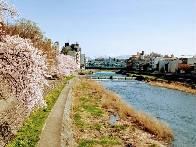 犀川 2020桜