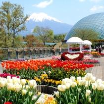 とっとり花回廊 春イメージ正方形