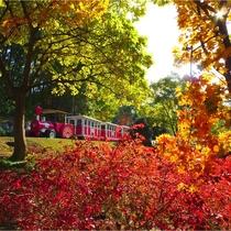 花回廊の紅葉