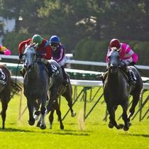 【函館競馬】競い合う騎馬と騎手の駆けあい