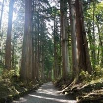 【戸隠神社奥社へ続く杉並木】奥社へは駐車場まで車約80分、駐車場から徒歩約30~40分です。