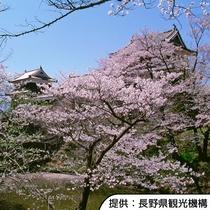 【上田城跡の桜】4月上旬~4月中旬(見頃の目安)/ホテルから車約50分