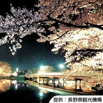 【臥竜公園の桜(夜)】4月中旬~4月下旬(見頃の目安)/ホテルから車約40分