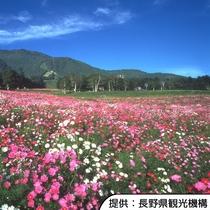 【黒姫高原】季節により様々な花が楽しめます。ホテルから車約40分(高速道路+一般道)です。