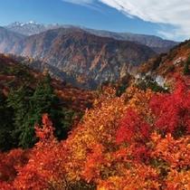 【白山】 富士山、立山と共に「日本3名山」と言われる白山。※お車で約100分