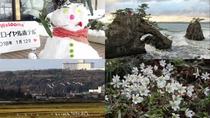 [観光]冬の使者ハクチョウと、春の訪れを雪割草が教えてくれます*