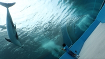 [観光]のとじま水族館(車で約40分)トンネル水槽*