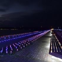 富来町【世界一長いベンチ】ときめき桜貝廊は2018年2月28日まで開催