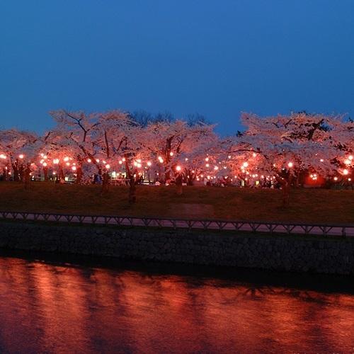 夜桜五稜郭公園