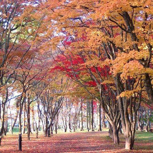 紅葉見晴公園2
