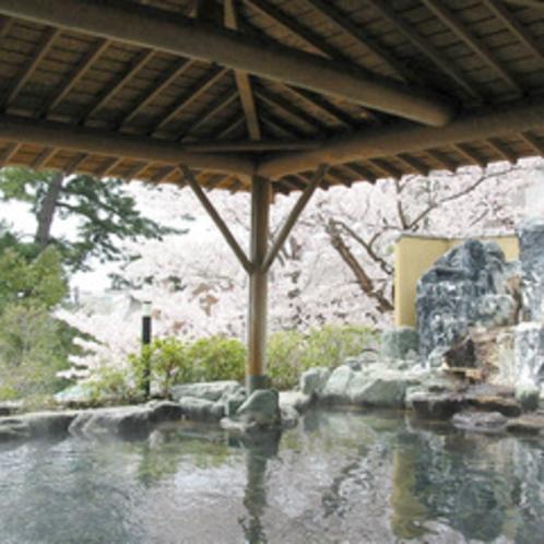 姉妹館ひがきホテルの桜