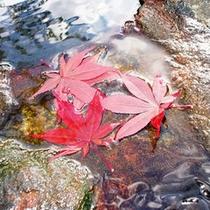 吟龍水と紅葉