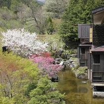 外庭と桃の花