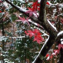 紅葉と雪景色