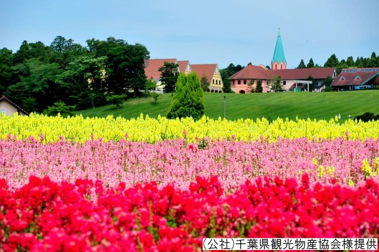 ■東京ドイツ村/当館から車で約65分 ※季節イメージ