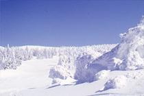 樹氷が広がる雪山
