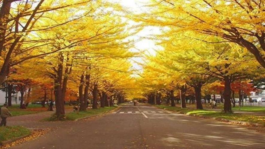 ・北海道大学 ポプラ並木