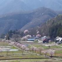 【春】ホテルからレンタサイクルで5分♪豊かな田園風景が広がります(#^^#)