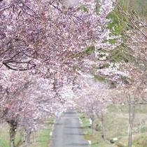 【春】サンバードおすすめの電動自転車サイクリングコース
