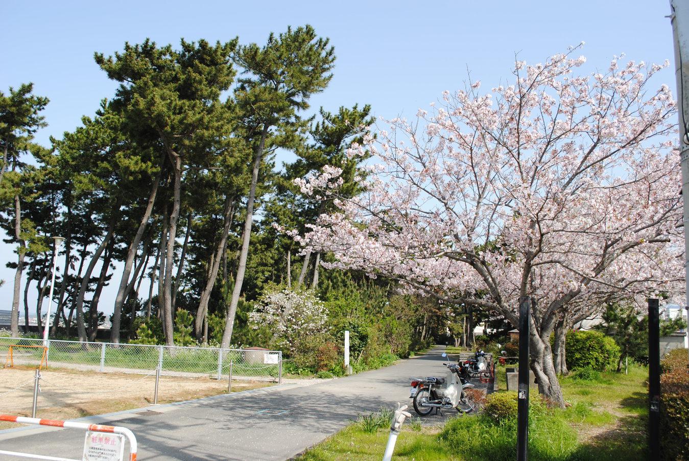 扇ケ浜遊歩道(徒歩で5分)