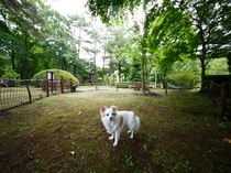 tiny little dogs fun park①