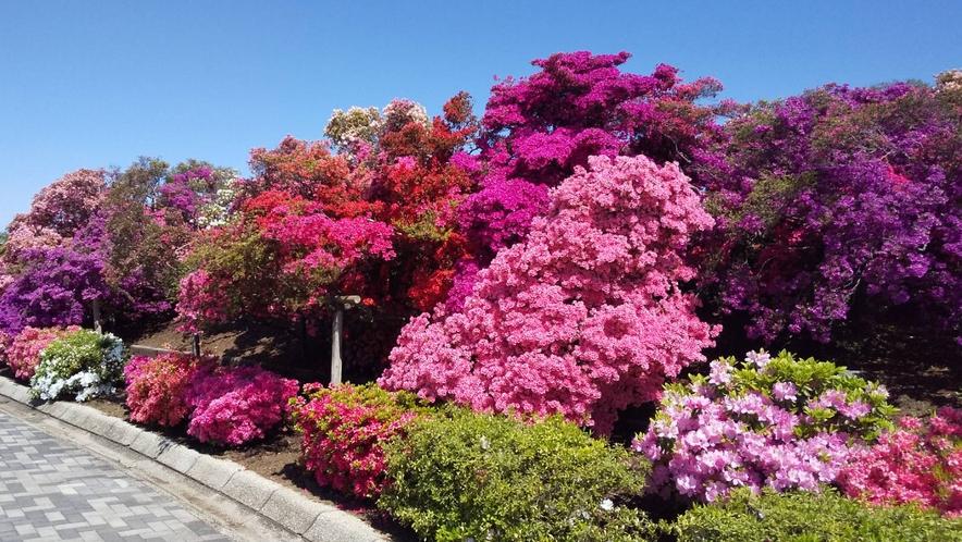 【つつじが岡公園】4月下旬~5月上旬にかけて色鮮やかに咲き誇ります★