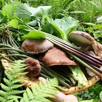 【山菜採り】たくさん収穫できました!