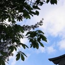 【お庭】きれいな青空と鮮やかな緑のコントラスト!