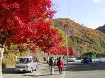 駐車場紅葉