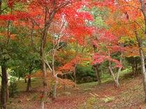 桜の園紅葉