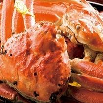 越前蟹(雄のズワイ 茹で蟹)