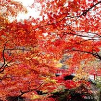 ≪紅葉の名所≫弥彦公園